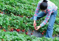 locuri de munca agricultura Huelva