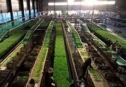 locuri de munca ferme Amsterdam