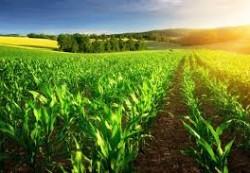 locuri de munca agricultura Milano