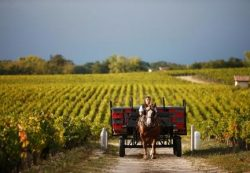locuri de munca ferme Bordeaux