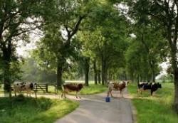 locuri de munca ferme Rotterdam