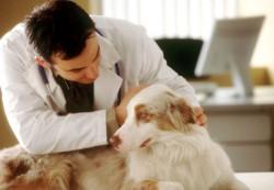 locuri de munca medic veterinar Groningen