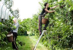 locuri de munca muncitori necalificati agricultura Londra
