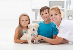 locuri de munca medic veterinar Berlin