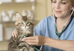 locuri de munca medic veterinar Copenhaga