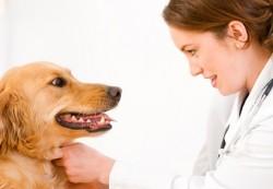 locuri de munca medic veterinar Dublin