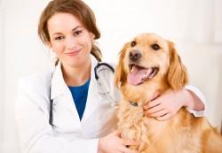 locuri de munca medic veterinar Madrid