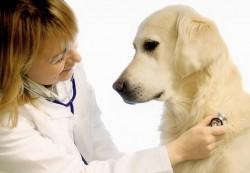 locuri de munca medic veterinar Milano
