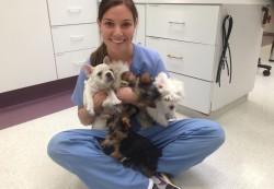 locuri de munca medic veterinar Paris
