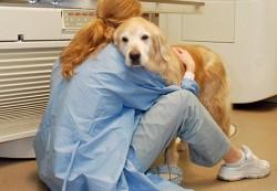 locuri de munca medic veterinar Stockholm