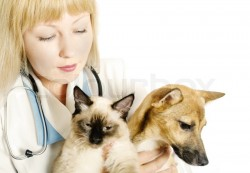 locuri de munca medic veterinar Viena